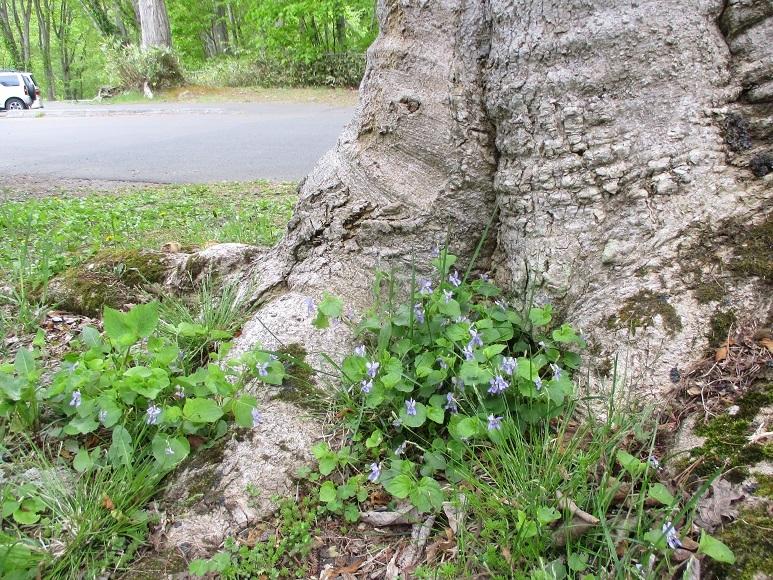 新緑花200524