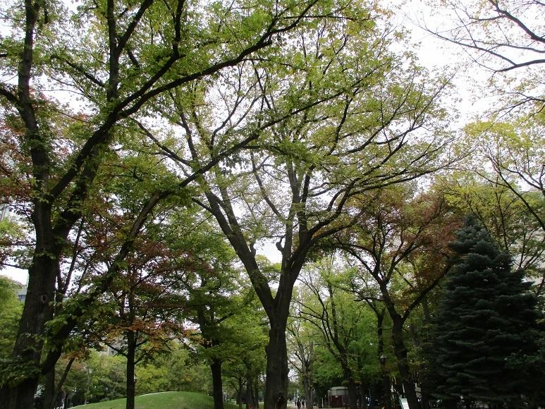 大通樹木緑201002