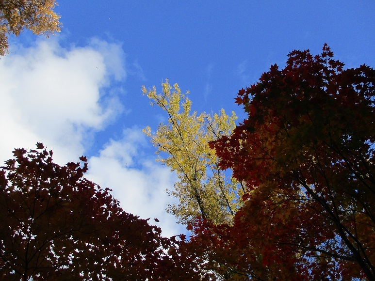 旭山公園紅葉201025⑦