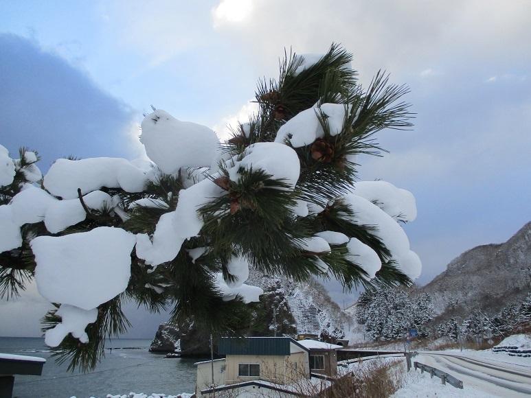 松雪海210110②
