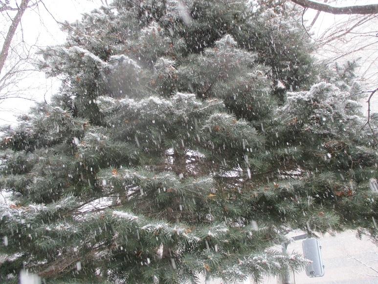大通雪201225