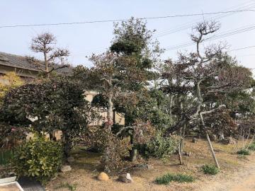 椎田の木の伐採