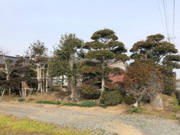 椎田の木の伐採2