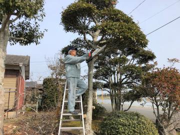 椎田の木の伐採3