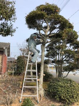 椎田の木の伐採4