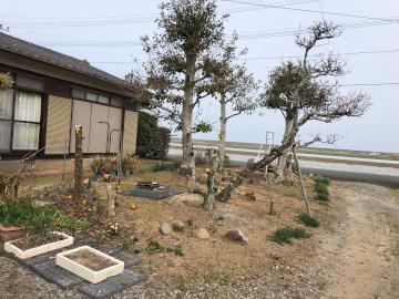 椎田の木の伐採6