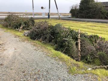 椎田の木の伐採7