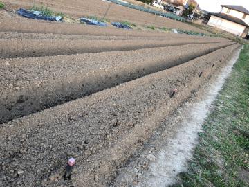 あと一歩の農園準備5
