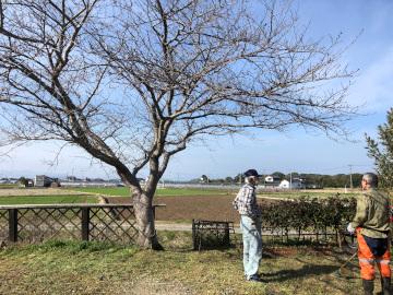 みんなで椎田の伐採7