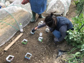 さつま芋苗植え第2弾と土の補充2