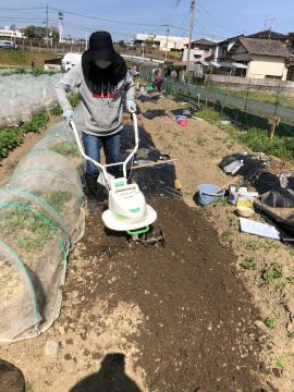 ヤーコン植え、有機米もみまき