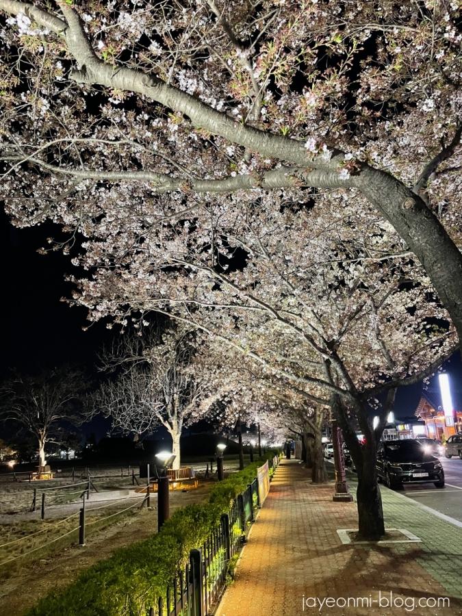 春の慶州_皇理団キル_2021年4月_8