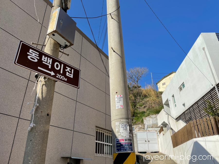 YouTube_韓国ロケ地巡り_浦項_椿の花咲く頃_2021年4月_7