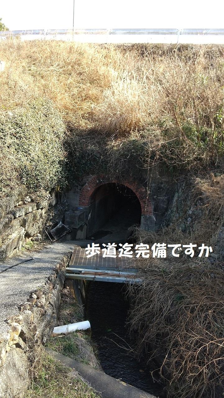 DSC_732.jpg