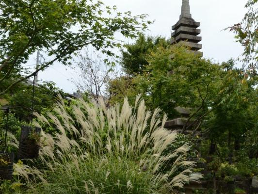 2020-9-20常泉寺 25