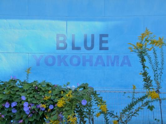 2020-11-4横浜 3