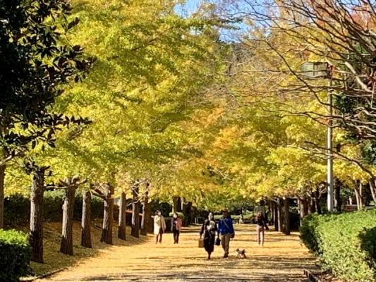 2020-11-10南郷公園 5
