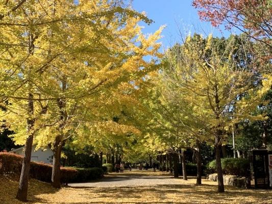 2020-11-10南郷公園 3