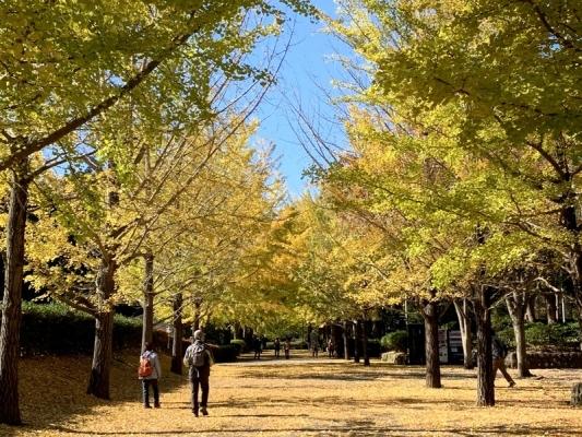 2020-11-10南郷公園 4