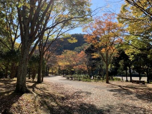 2020-11-10南郷公園 8