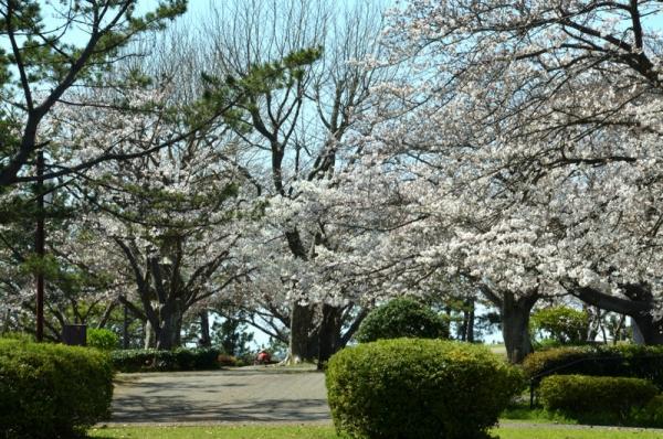2021-3-24野島山展望台 5