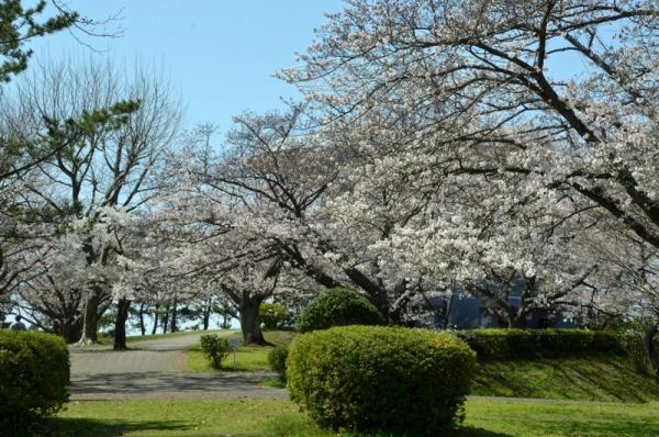 2021-3-24野島山展望台 6