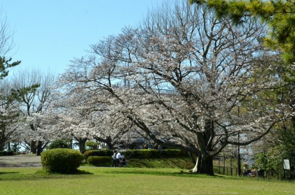 2021-3-24野島山展望台 4