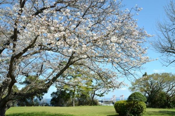 2021-3-24野島山展望台 1