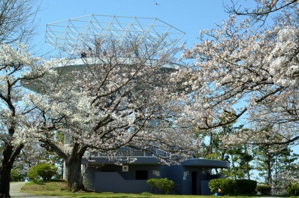 2021-3-24野島山展望台 8