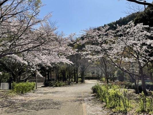 2021-3-29南郷上ノ山公園 8