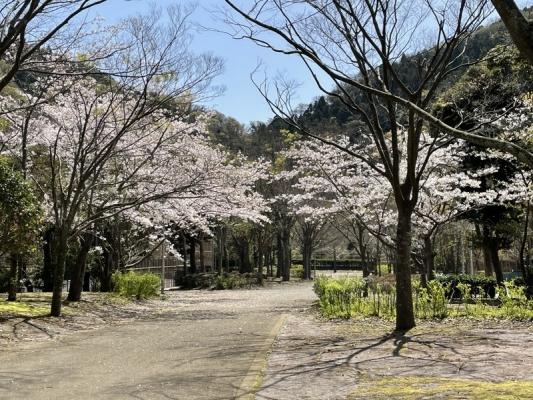 2021-3-29南郷上ノ山公園 7