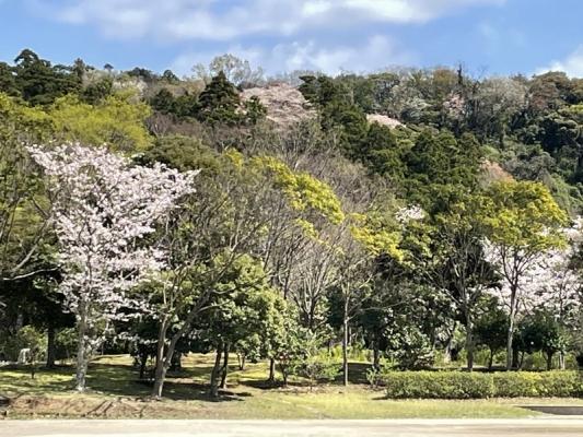 2021-3-29南郷上ノ山公園 5