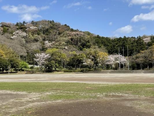 2021-3-29南郷上ノ山公園 3