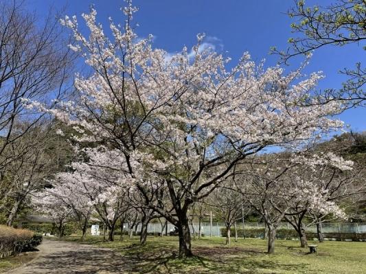 2021-3-29南郷上ノ山公園 1
