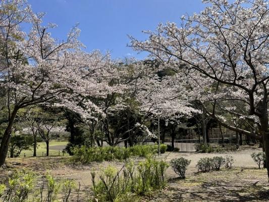2021-3-29南郷上ノ山公園 9