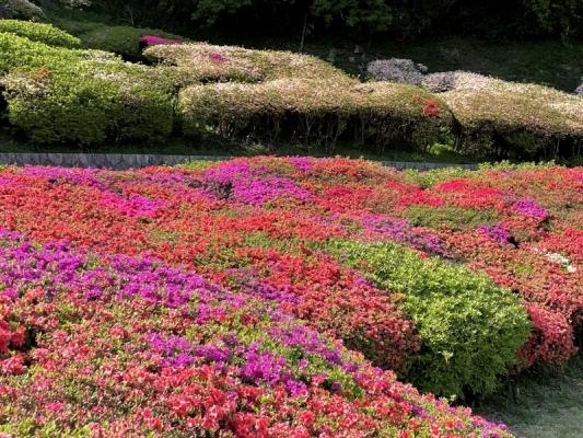 2021-4-2大田和つつじの丘 9