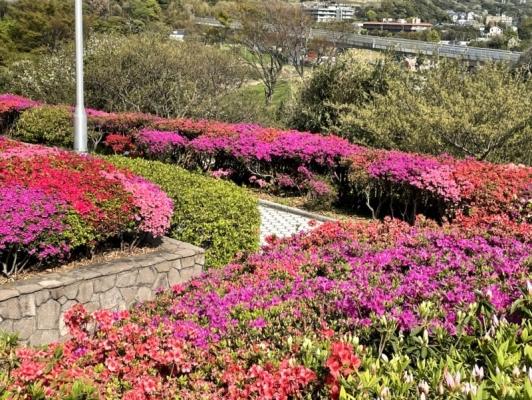 2021-4-2大田和つつじの丘 8