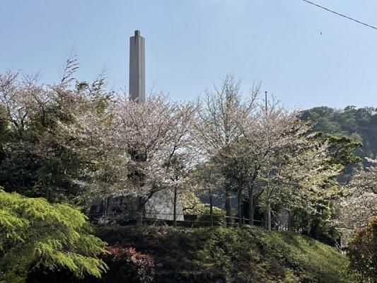 2021-4-2花の木公園 7