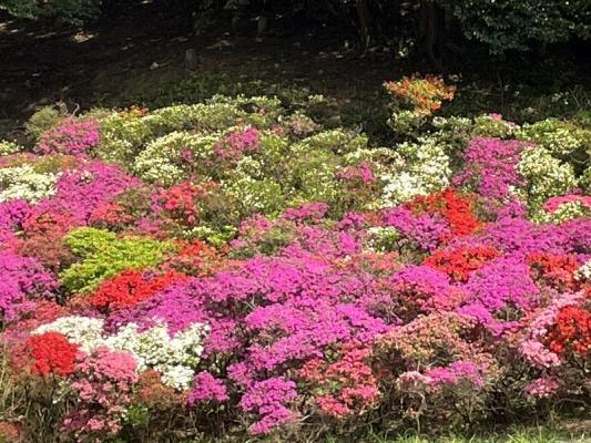 2021-4-2花の木公園 6