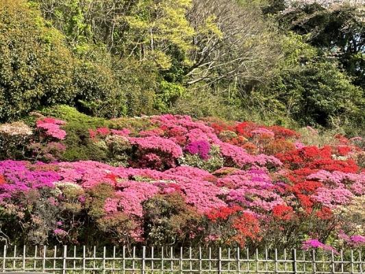 2021-4-2花の木公園 5