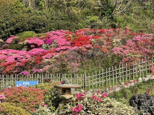2021-4-2花の木公園 3