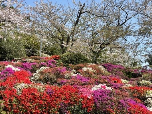 2021-4-2花の木公園 1