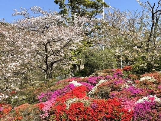 2021-4-2花の木公園 11