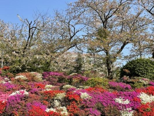 2021-4-2花の木公園 10