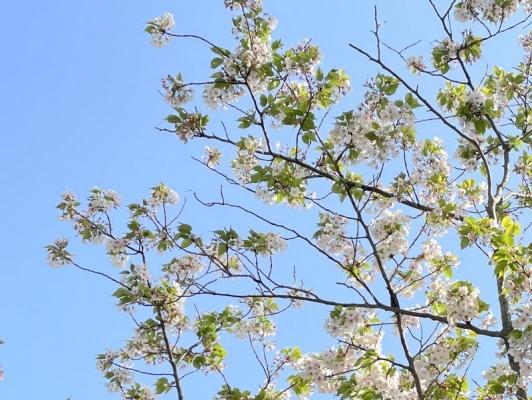 2021-4-2花の木公園 8