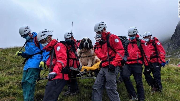 01-st-bernard-rescue-england-scafell-pike.jpg