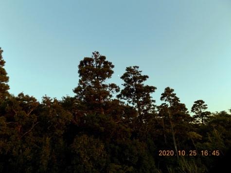 ①DSCN3035-2