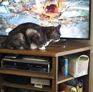 コピ.テレビに隠れるサチを追う1