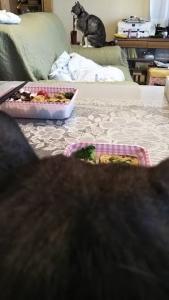 朝ご飯3.4.22クマ2