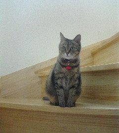 階段から覗くヒメ